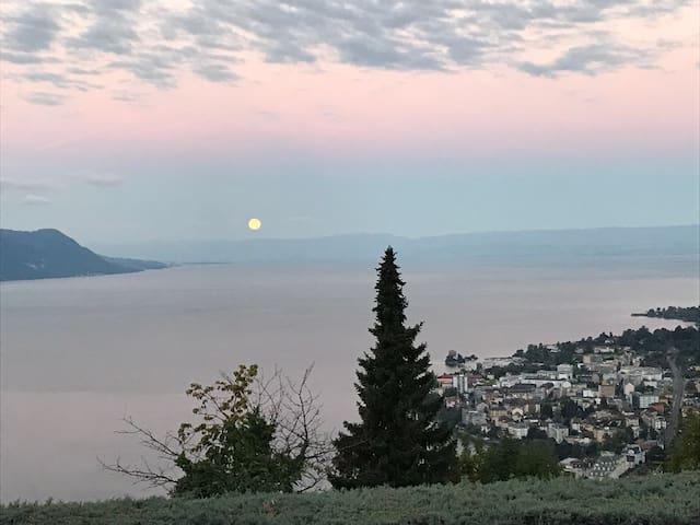 Les merles Cadre sublime à Montreux
