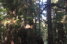 Big Cedars Trail
