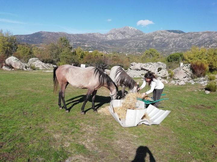 Aprenderemos sobre los caballos