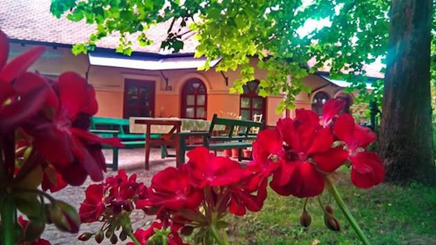 Quiet garden in heart of the city - Palić - Apartment