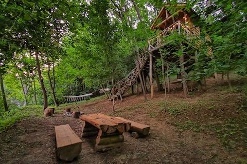 Treehouse Hedera