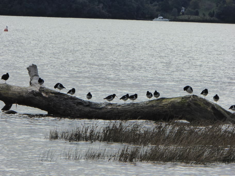 The seabirds love the log in the bay.