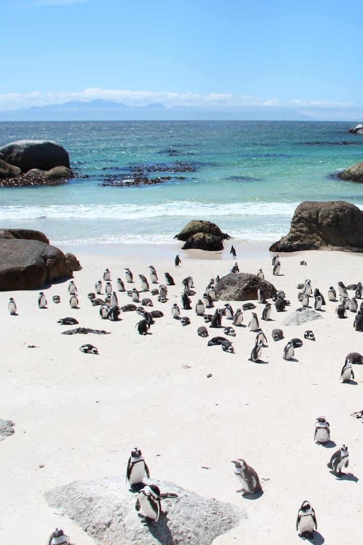 Boulders Beach & Penguins