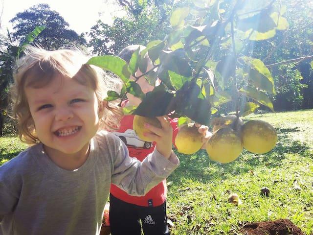 Cítricos del predio. Hay mandarinas, naranjas,  pomelos,  limones,  higos, pitangas, moras, mango, yaboticaba,  nísperos,  banana, granada, acerola, guayaba. ..