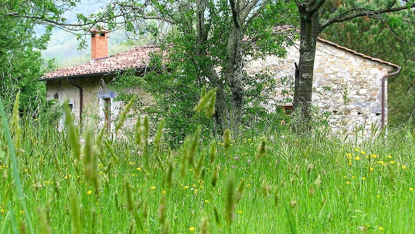 Tuscan Cottage with stunning view on Apuan Alps!