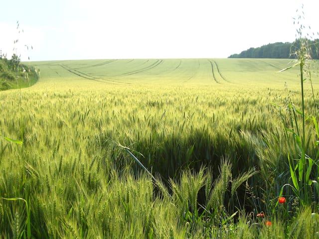 Gourville champ de blé