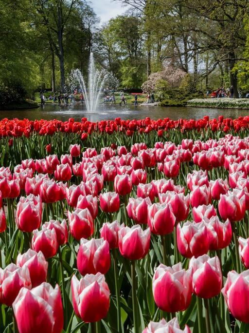 In het voorjaar bloeit Keukenhof zo mooi! Slechts 10 minuten met de auto.