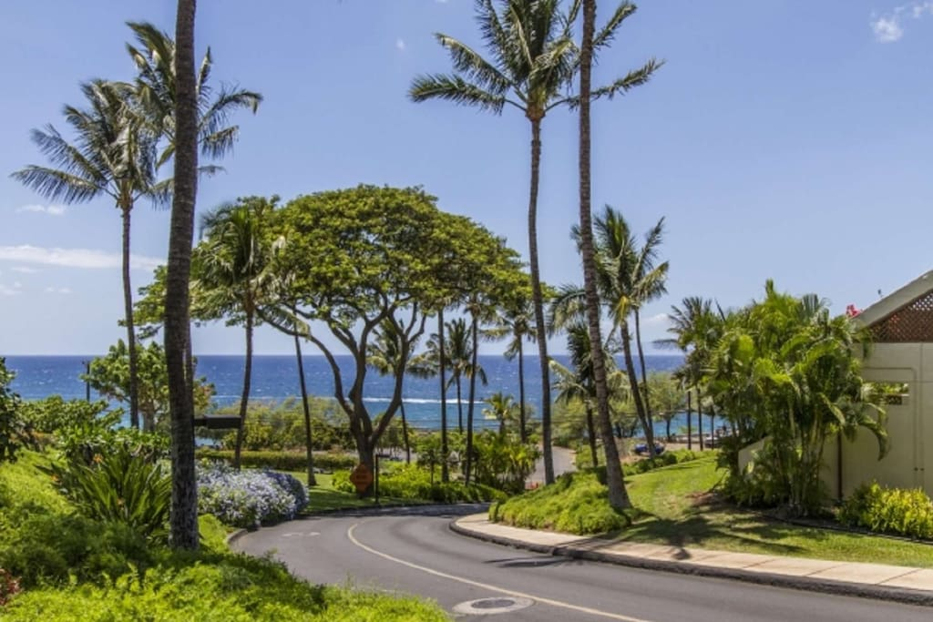 The lush tropical and beautifully maintained resort of Maui Kamaole. Situated on over 20 acres - across from Kamaole III Beach