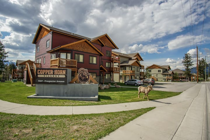 The immediate neighbourhood with bighorn sheep stopping by for a visit