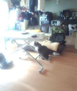 猫いっぱい - Hachioji - Overig