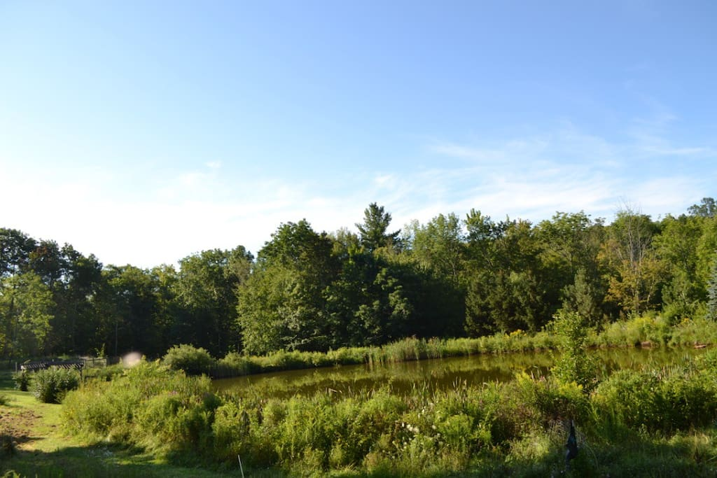 Your view from the camper out onto the grassy area with pond.