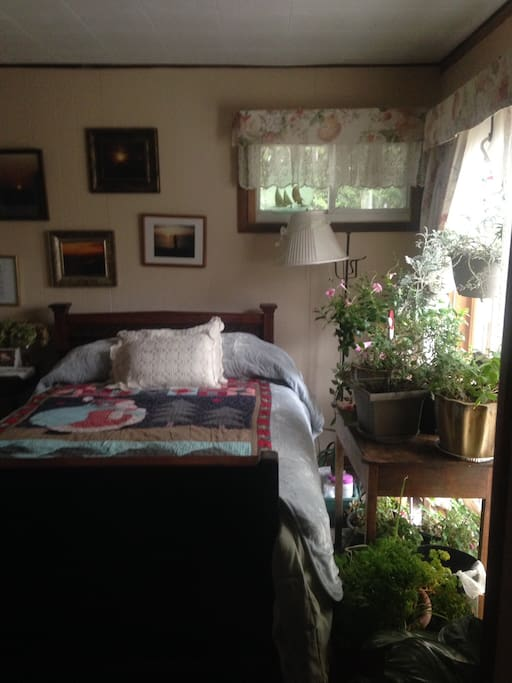 I won't be wintering as many plants because although I've offered this room as a single, couples book it, & one would have difficulty maneuvering out of bed. The bed is draped in a Santa quilt