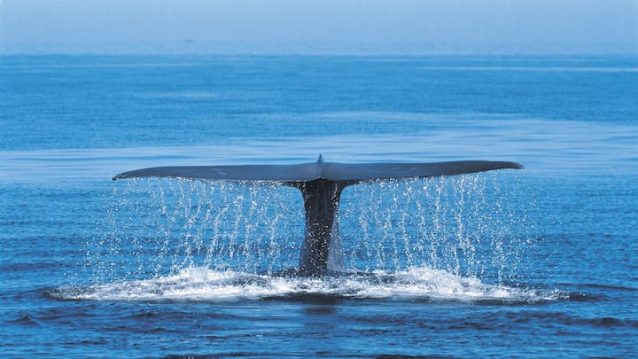 The Blue Whale > Resort + rate includes cleaning