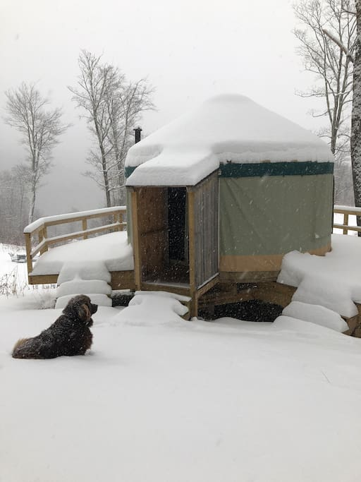 Snowfall at the yurt, dog not included