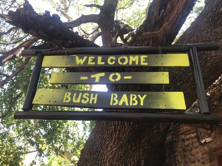 Hyhena Rondavel @ Bush Baby Lodge Tshipise