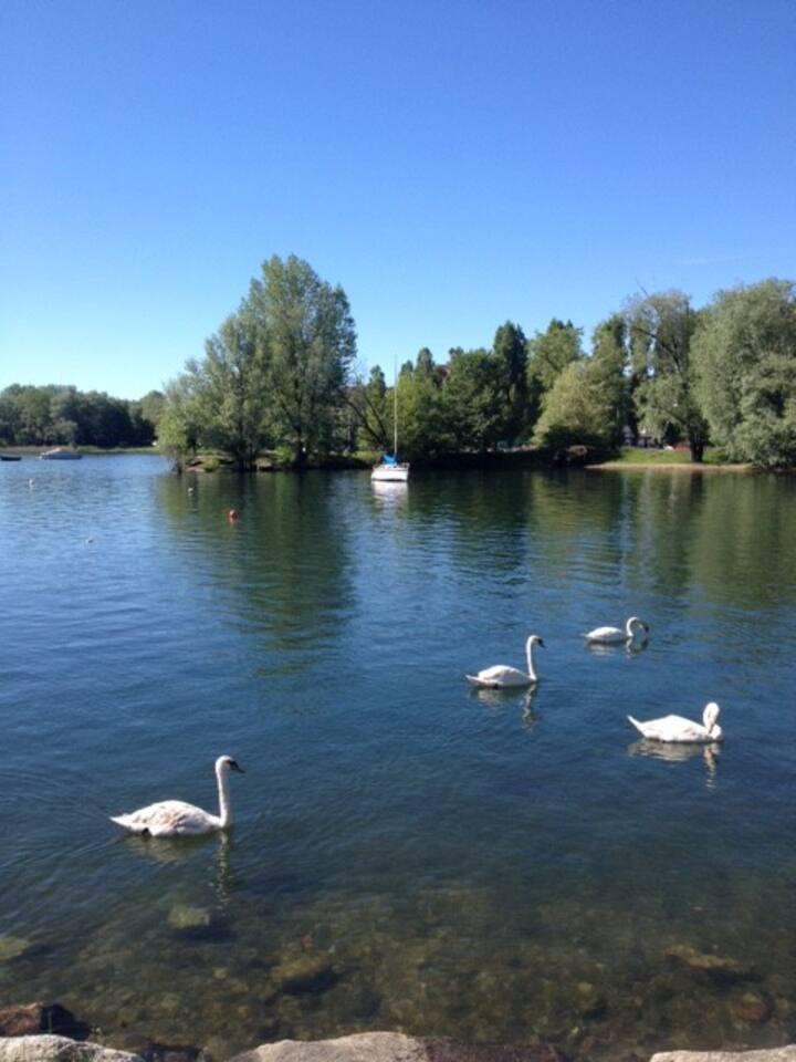 Lago a pochi minuti da casa