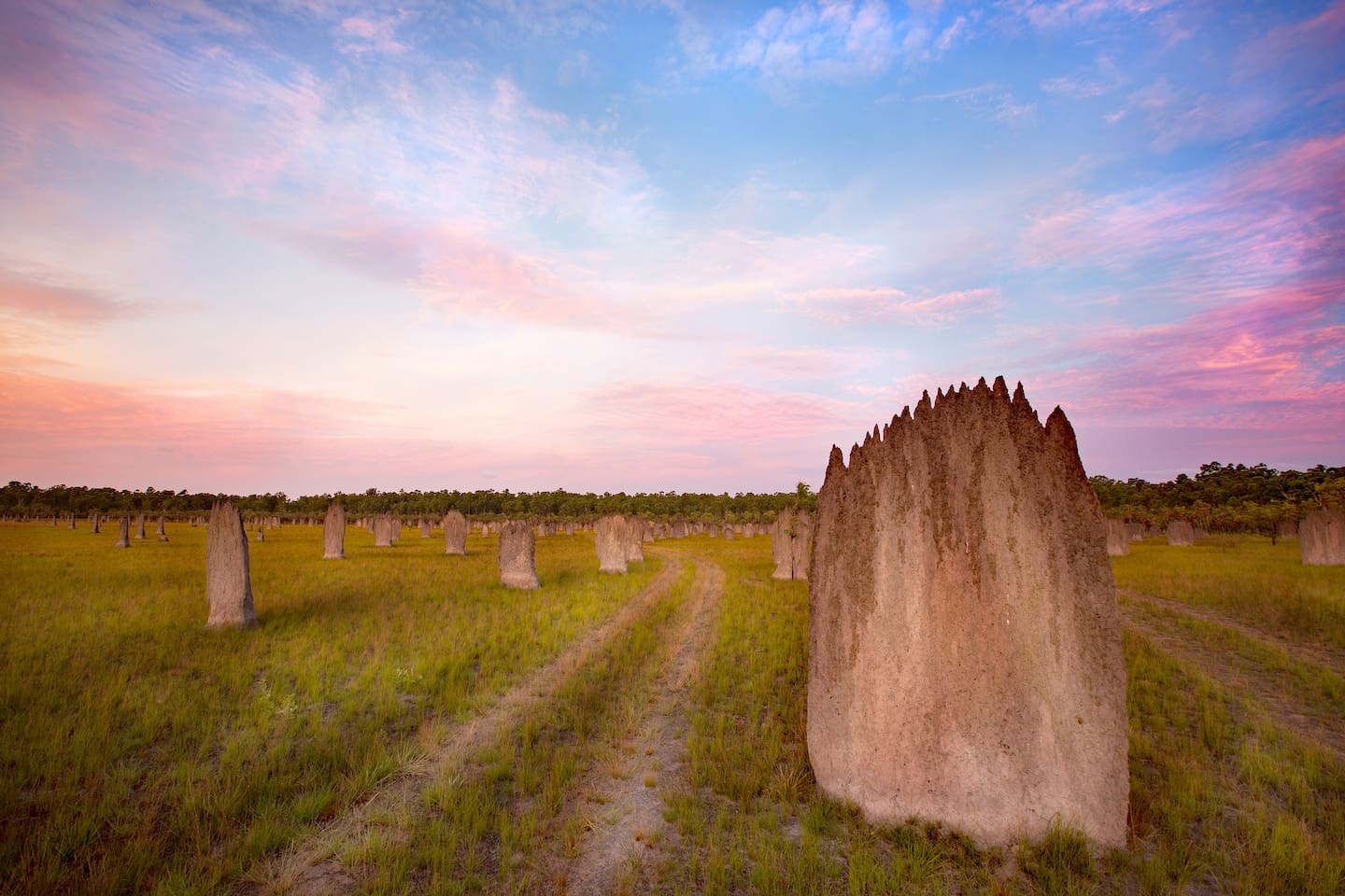 Explore our floodplains.  Magnificent magnetic termite mounds and seasonal wetlands full of birdlife
