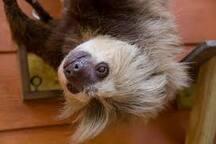 Arenal Sloth Room Homestay