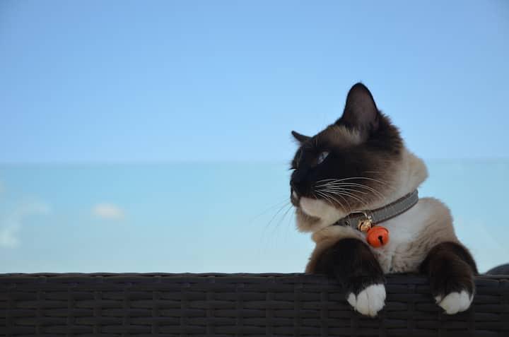 【初尘语风】晴天·浴缸大床,做我的猫,大理古城,提供接站服务,免费停车,送早餐