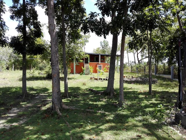 Gästehaus im Mango Park - Moalboal - Pensió