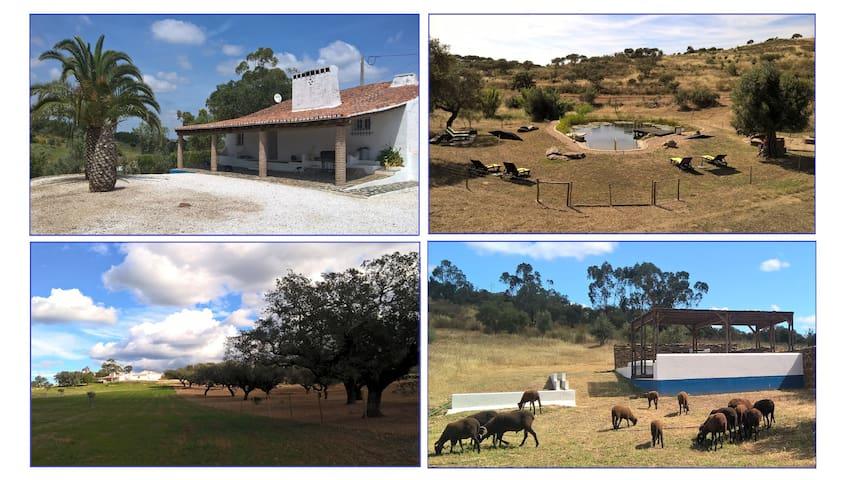 FONTE SANTA - Quinta com animais e Piscina Natural