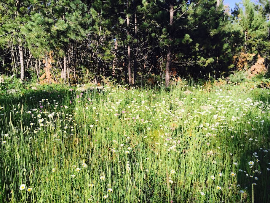 Abundant wild flowers at Snowy Bluff from June - August