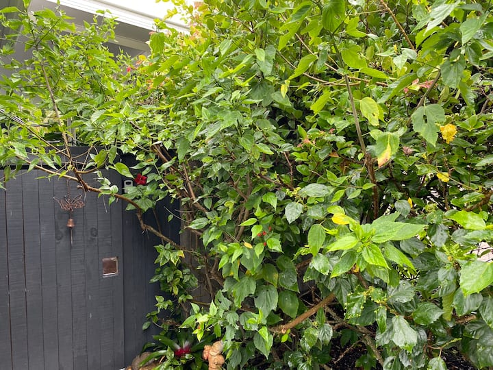 Secret Garden Retreat