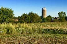 View of large Barn and silo to the south