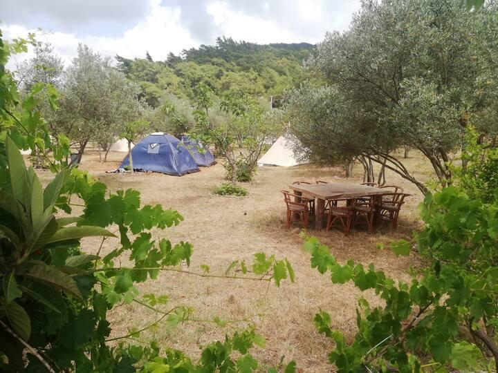 Fethiye kayaköyde kamp yeri
