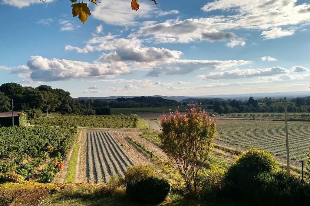 Vue de la chambre sur l'horizon, les vignes et lavandes