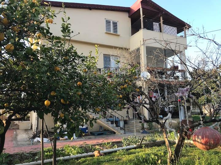 Peace's House