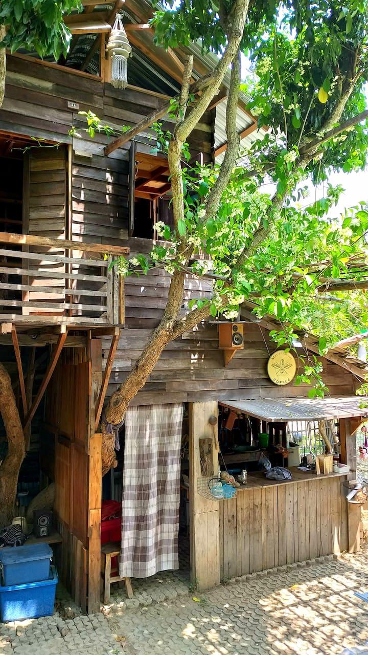Adobe Home Chiangmai Lovely tree house😊