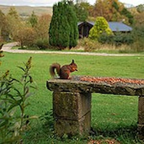 Rare Red Squirrel's live in the 7 acre private grounds amongst the vast array of wildlife and birds, lovely to watch whilst you relax