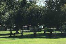 4 mini horses on property