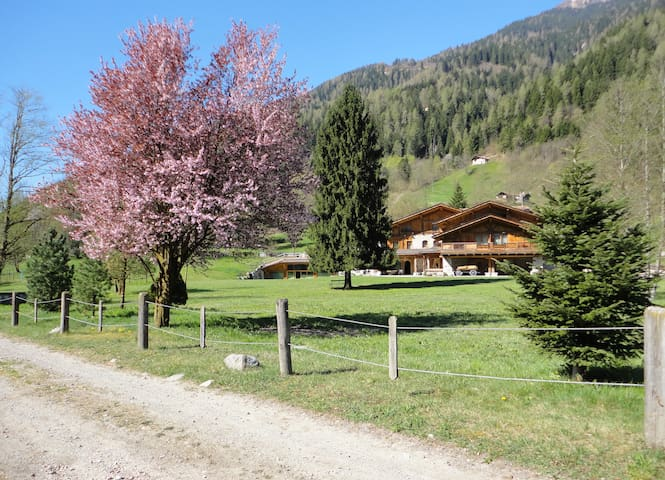 Alpine Chalet Maso Brenta - Caderzone - Chalet
