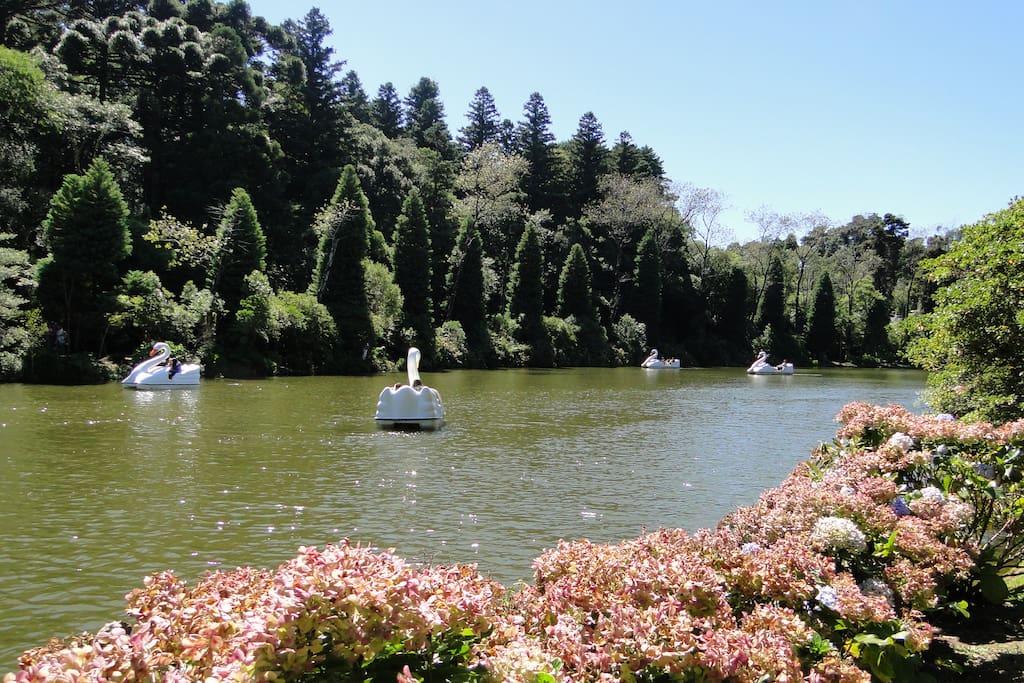 Lago Negro (400m do apê)