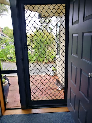 Screen door with lock Cat is Buttons