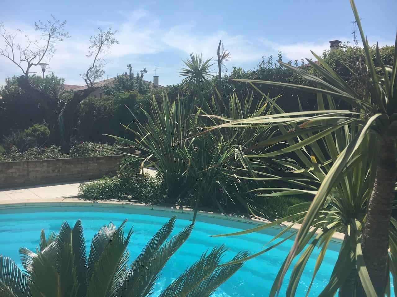 piscina giardino