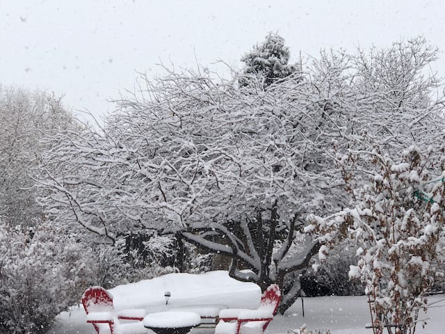 The beauty of the snow accents each branch of the crab apple tree in the courtyard.