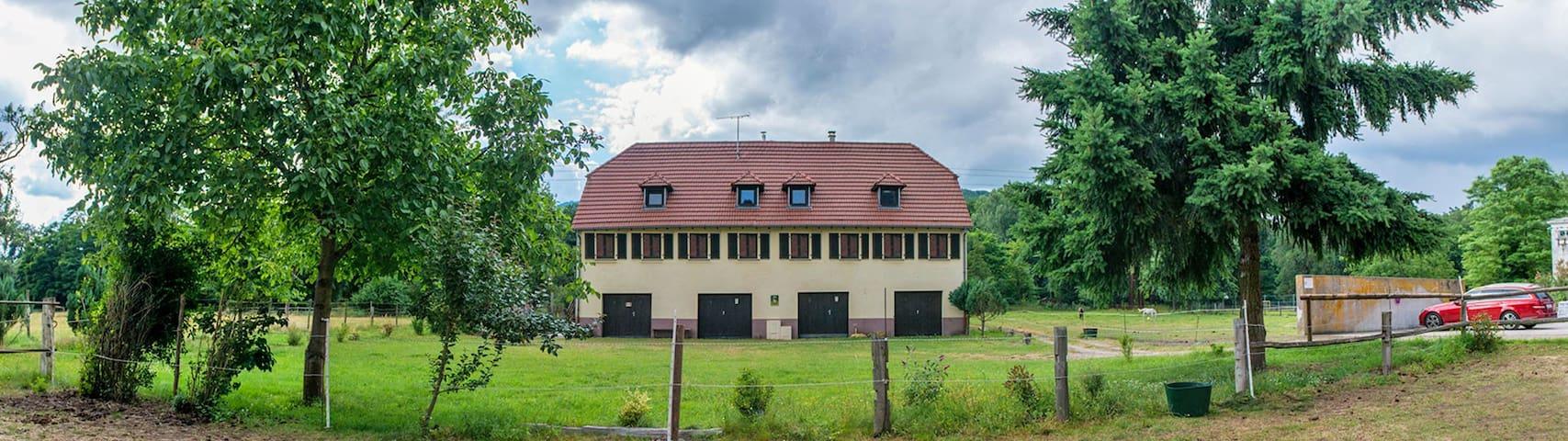 Saphir de La Forge - Wintzenheim