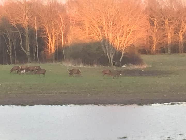 Anneks i Helsinge med udsigt til mark og skov