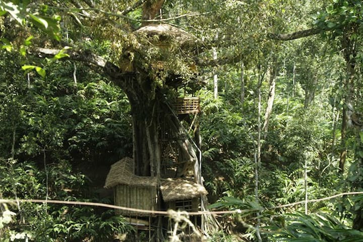 Tree house on a 1000 year old Banyan tree - Kumily - Treehouse