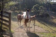 Horses everywhere, we adore horses!