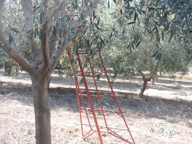 Coastal Olive Farm, Great Location - Megadim - Talo