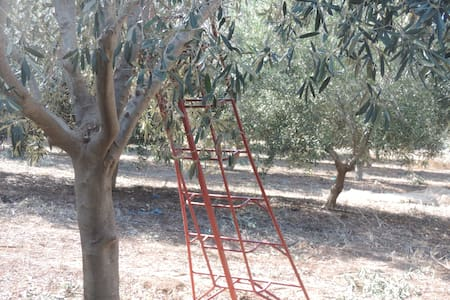 Coastal Olive Farm, Great Location - Megadim