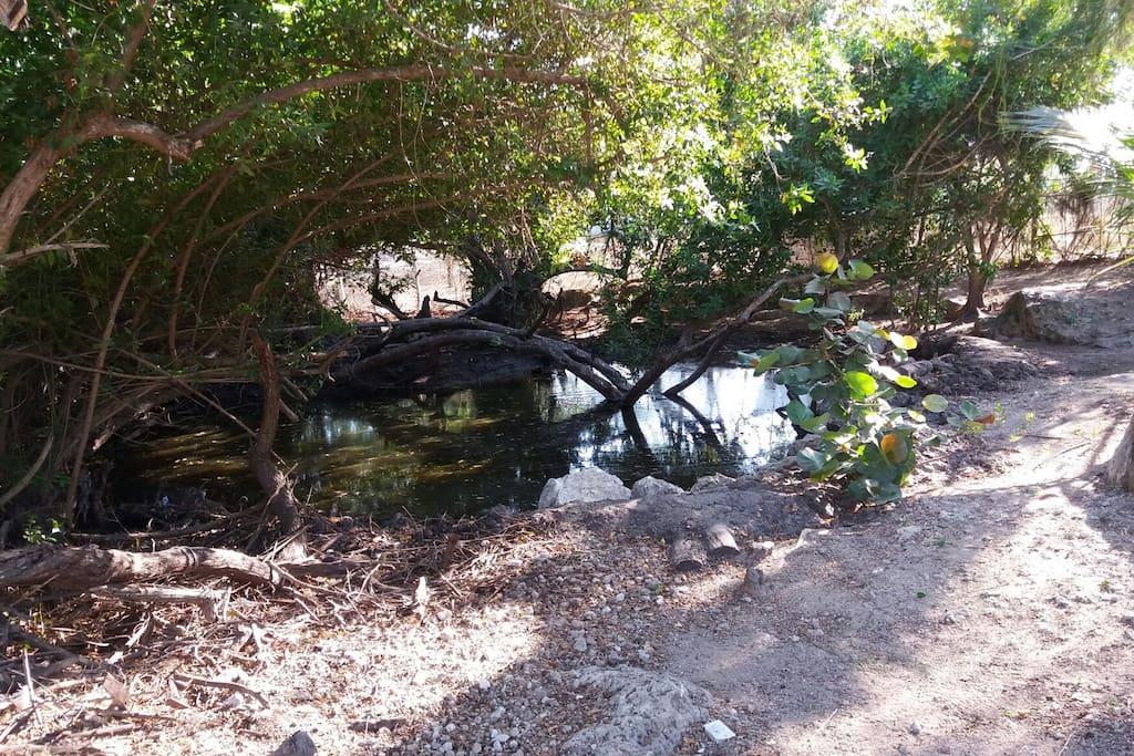 Este lago permanece lleno de pajaros iguanas y toda variedad de animales