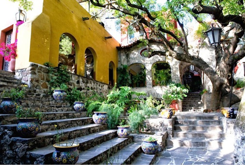 Entrance / Zapote tree terrace