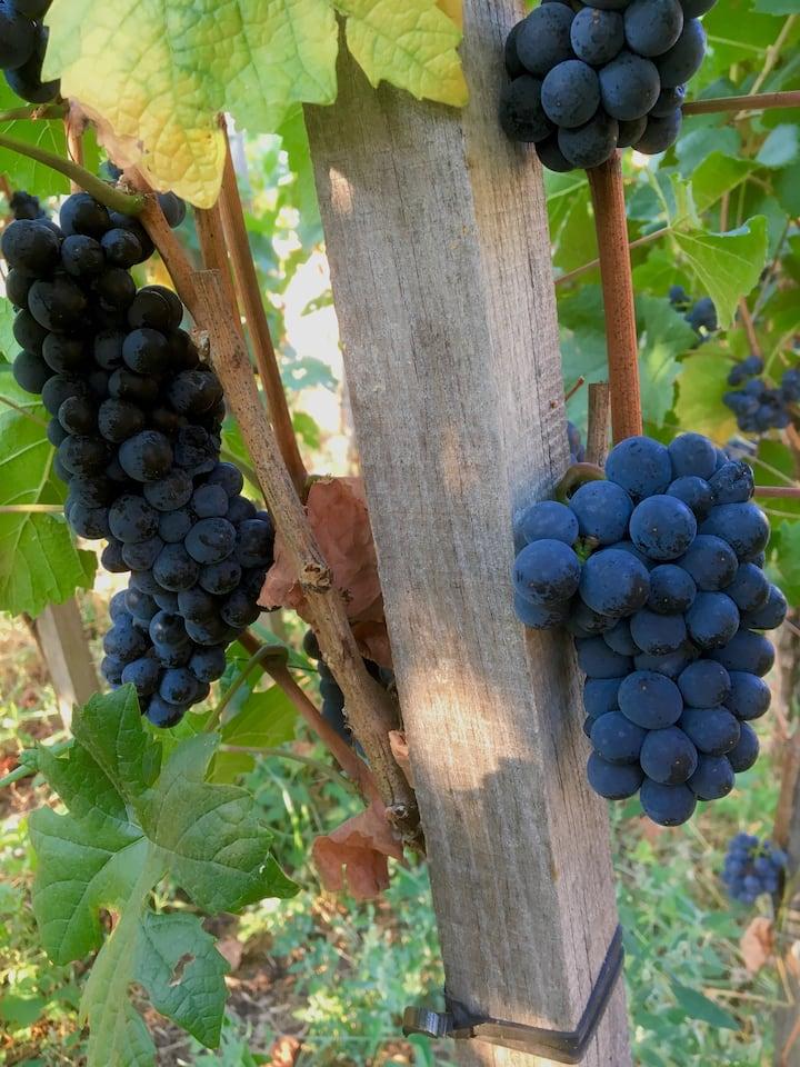 Pinot Noir—-Spätburgunder- our passion