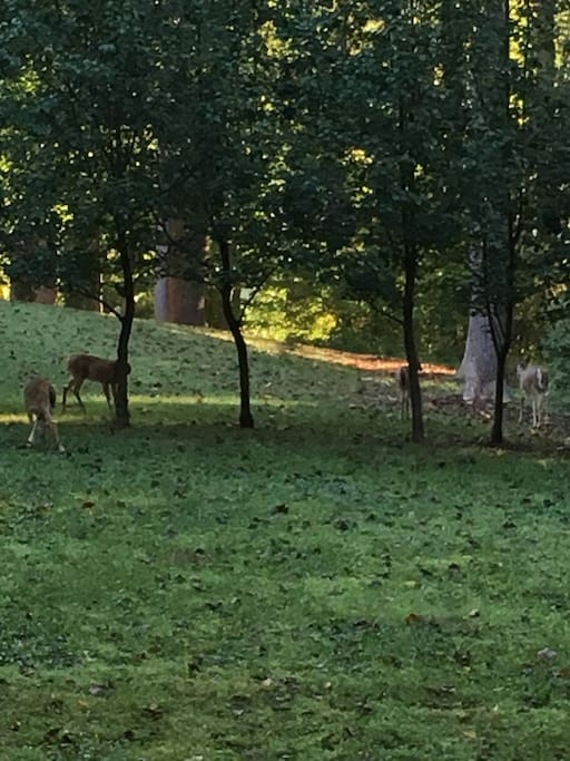 Deer in the morning!