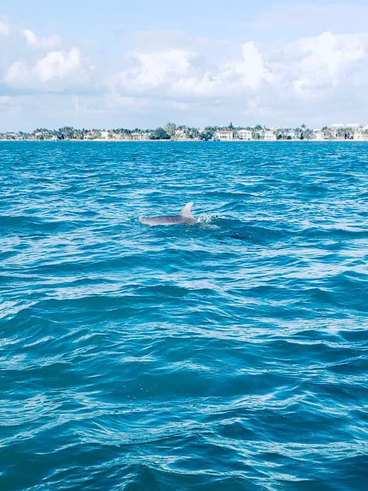 Discover wild dolphins & local wildlife